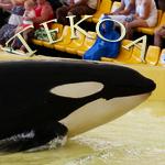 [Fiche] Identification des orques 3003138555_1_15_WH0hSaH8