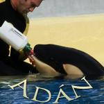 [Fiche] Identification des orques 3003138555_1_21_4xtoUIU6