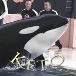 [Fiche] Identification des orques 3003138555_1_7_HYEl1EZM
